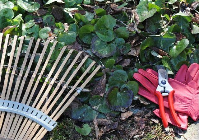 gloves, rake, clipper