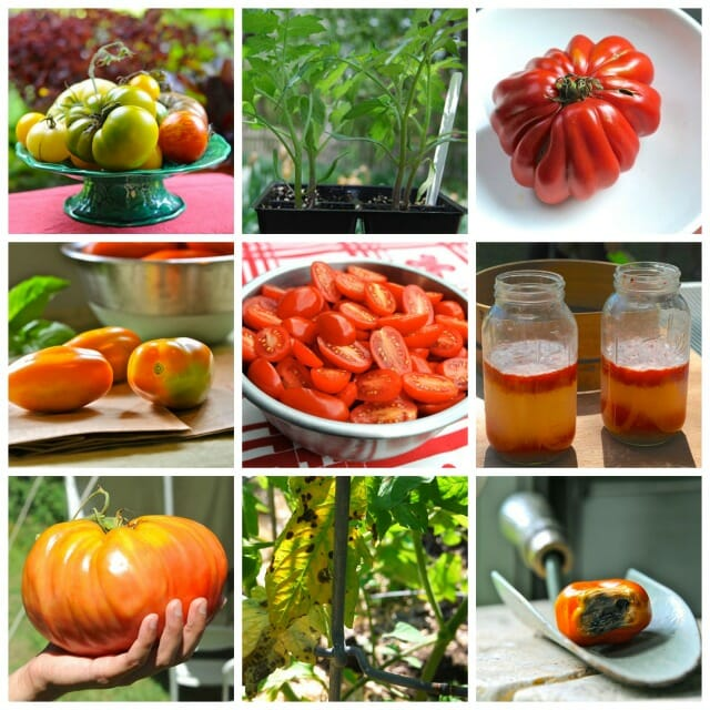 16 Things I Know About Growing Tomatoes A Way To Garden