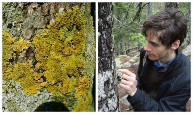 james lendemer lichens 4