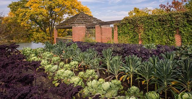 Shade Vegetable Garden Herbs