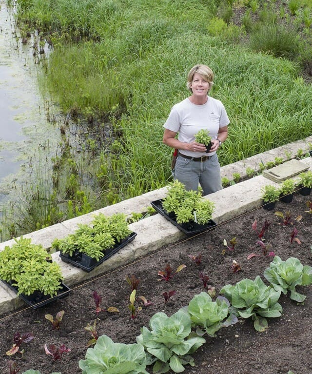 Edible Landscape Design: Edible-landscaping Ideas, With Lisa Hilgenberg Of Chicago