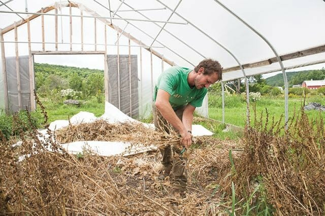 Stephen Harvesting Spinach Seed