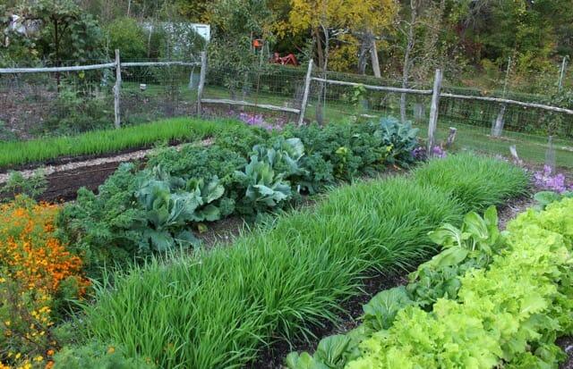 Lee Reich no till vegetable garden