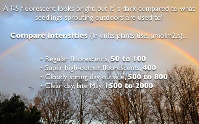 intensity of outdoor light in spring