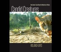 'candid creatures,' a view of nature 'caught' on camera traps, by roland kays