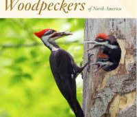 Peterson Guide to Woodpeckers by Stephen Shunk