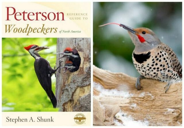woodpecker collage