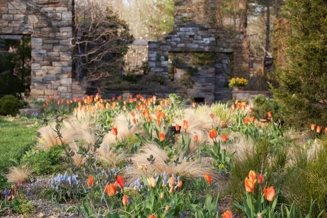 designing with flower bulbs with chanticleers lisa roper