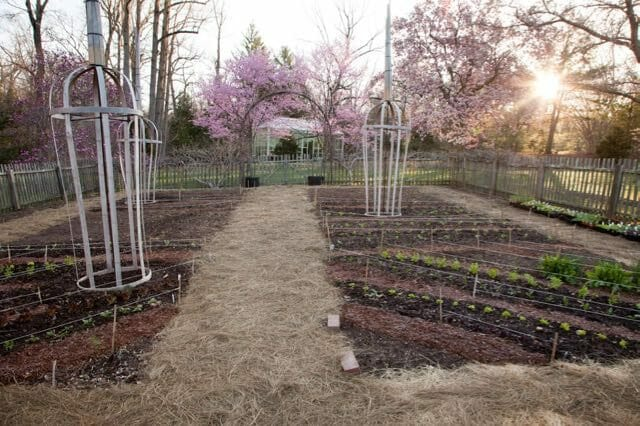 planting-in-the-vegetable-garden-is-underway-lr