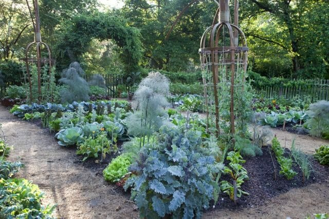 rows-of-kale-lettuce-cabbage-and-fennel-produce-a-bounty-in-the-vegetable-garden-while-peas-climb-on-carrot-shaped-trellises-lr