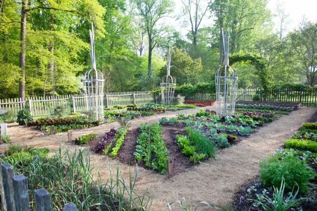 the-vegetable-garden-is-bursting-with-spring-greens-including-lettuce-beets-spinach-and-chives-lr