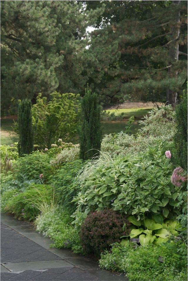 nybg-perennial-garden-buxus-graham-blandy