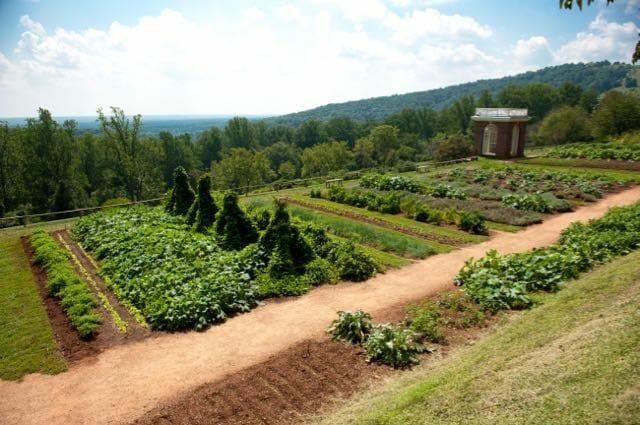 CR3116 Rows of plants in gardens of Thomas Jefferson's Monticello in Charlottesville VA