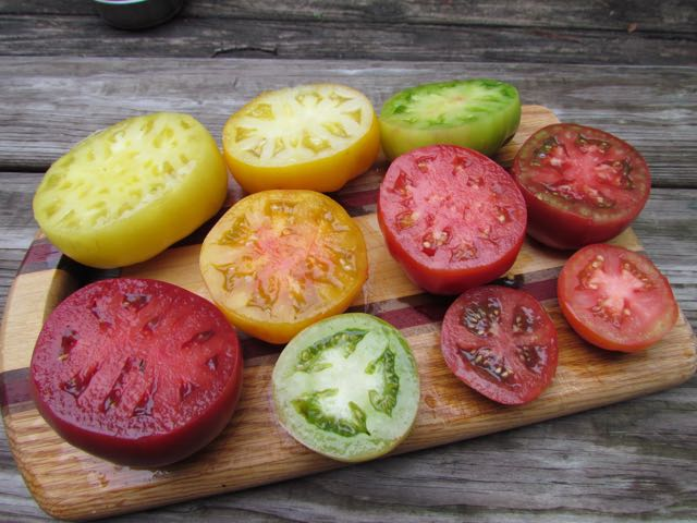 tomato success, from transplant to harvest, with craig lehoullier