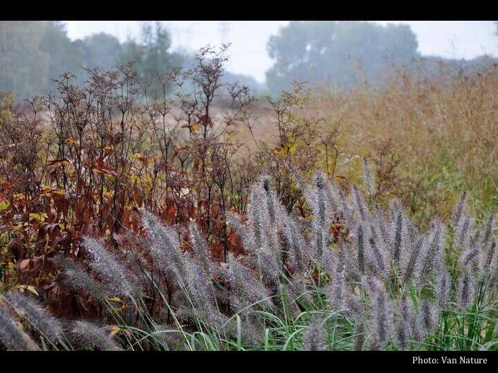 Multi Season Perennials At Allen Centennial Garden With Ben Futa A Way To Garden