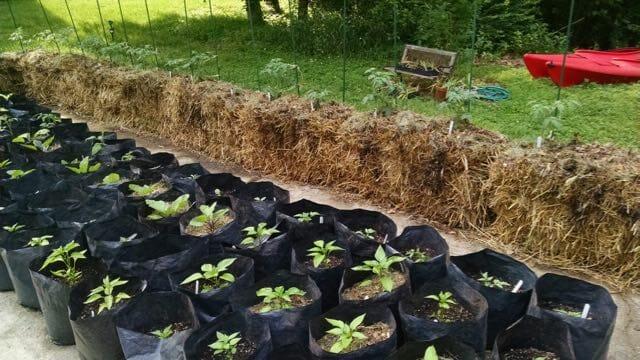 craig lehoullier's straw bale garden