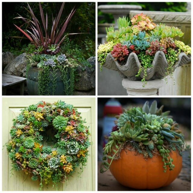 Get Creative With Succulents Plus Spring Rehab With