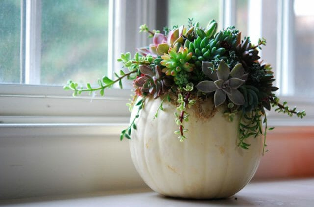 succulents in hollow pumpkin