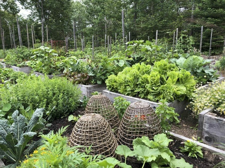 extend your vegetable garden season, with niki jabbour