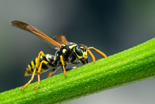 showing some respect for wasps, with eric eaton